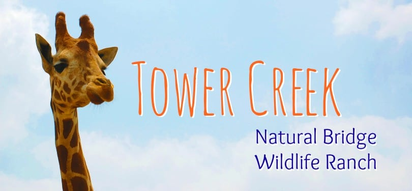 The  brand new Tower Creek at Natural Bridge Wildlife Ranch